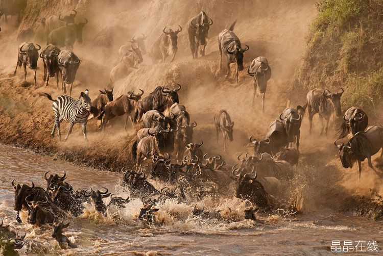 去肯尼亚看壮观的动物大迁徒感受生命的奇迹